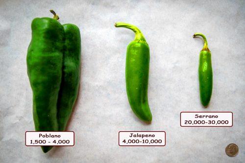 chile serrano vs jalapeño