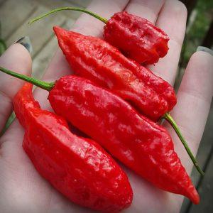 origen chile fantasma